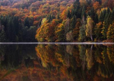 autumnal-colorful-conifer-217120
